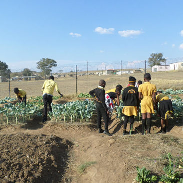 Nutrition and sustainable agriculture